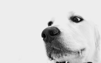 Djur - Dog Wallpapers and Backgrounds ID : 101882