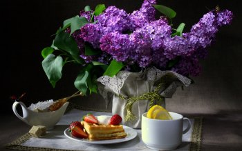 Photography - Still Life Wallpapers and Backgrounds ID : 102380