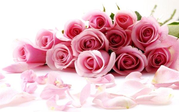 Terre/Nature Rose Fleurs Fleur Pastel Fond d'écran HD | Image