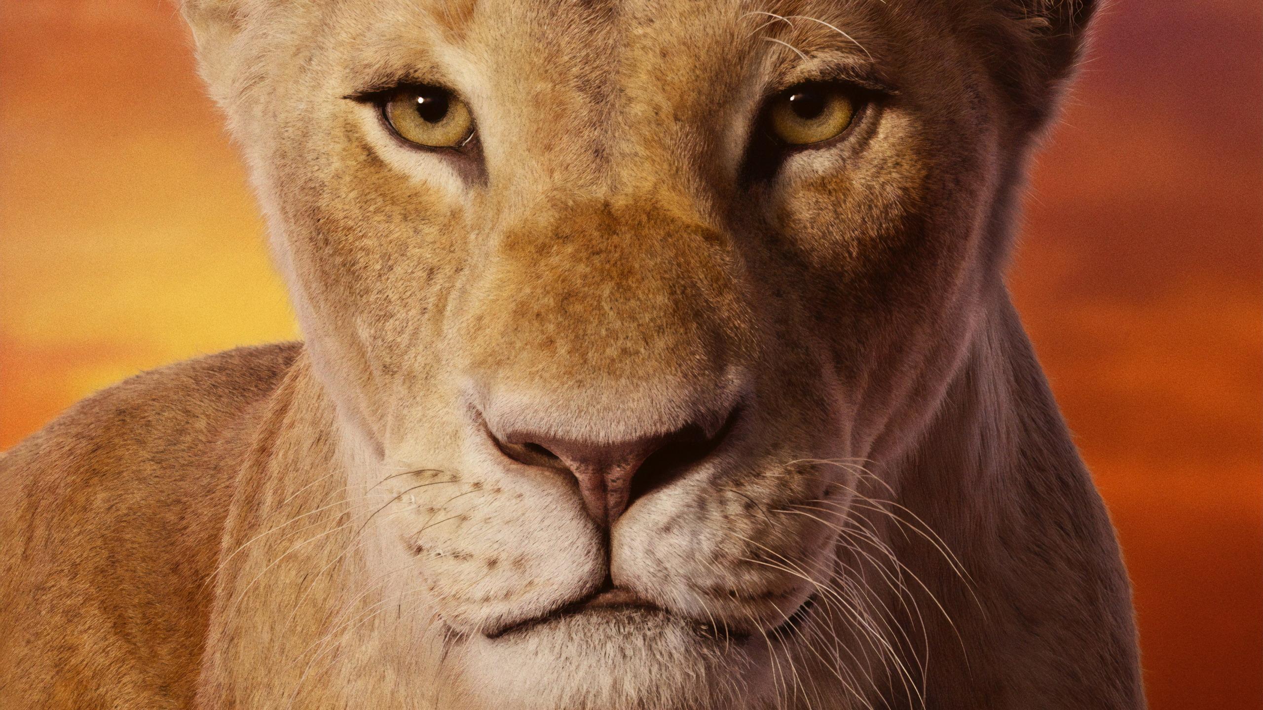 Le Roi Lion 2019 Fond Décran Hd Arrière Plan