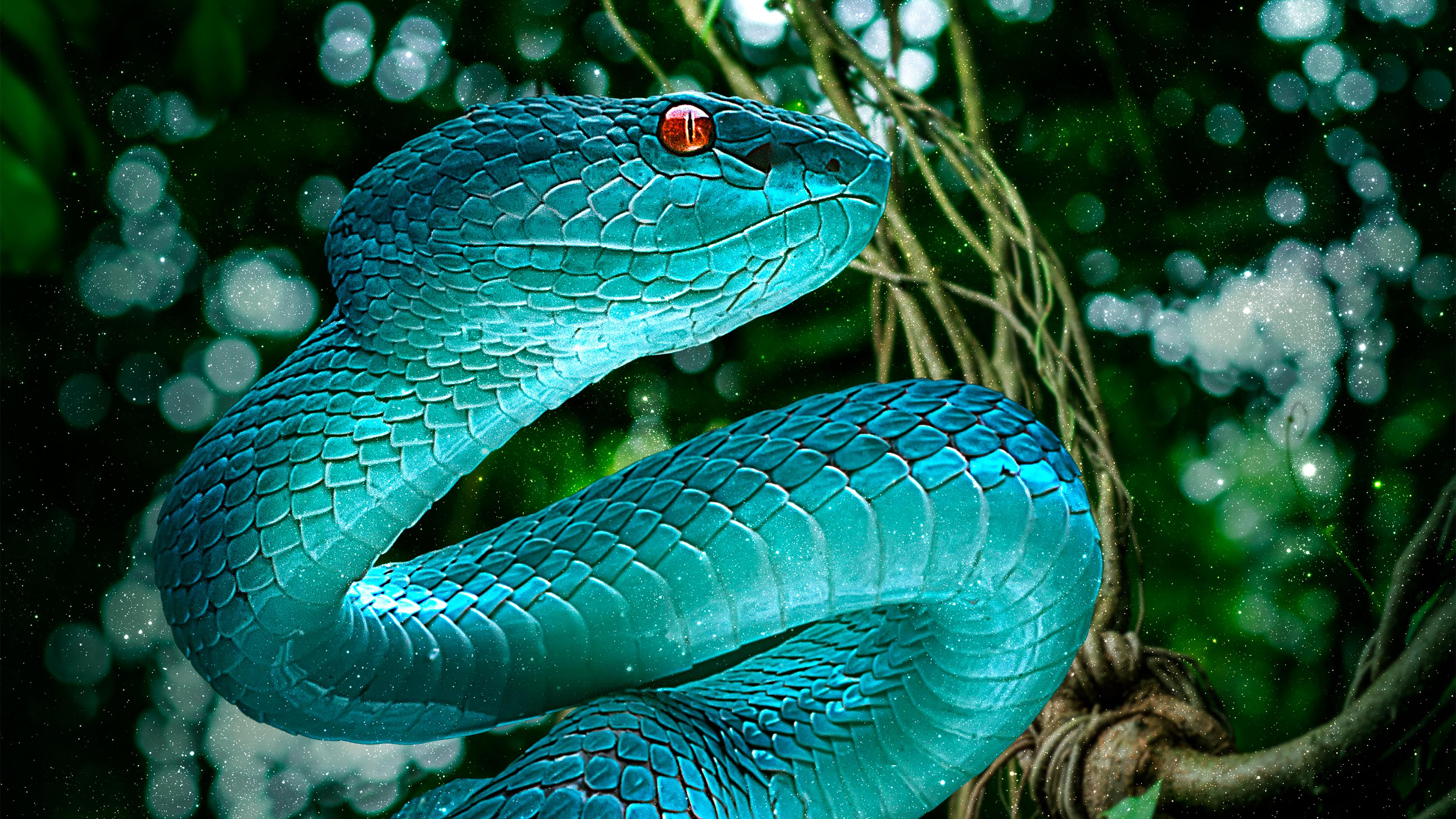Blue Pit Viper 4k Ultra Hd обои фон 3840x2160 Id