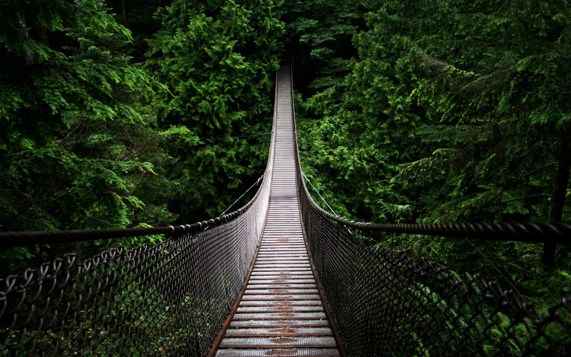 Man Made - Bridge  Forest Wallpaper