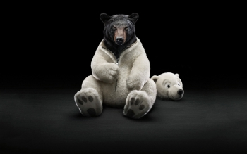 Humor - Bear Wallpapers and Backgrounds ID : 103490