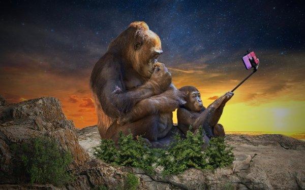Humor Animal Gorilla Selfie HD Wallpaper | Background Image