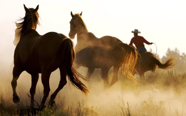 Photography Cowboy Horse HD Wallpaper | Background Image