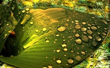 Artistic - Water Drop Wallpapers and Backgrounds ID : 104140