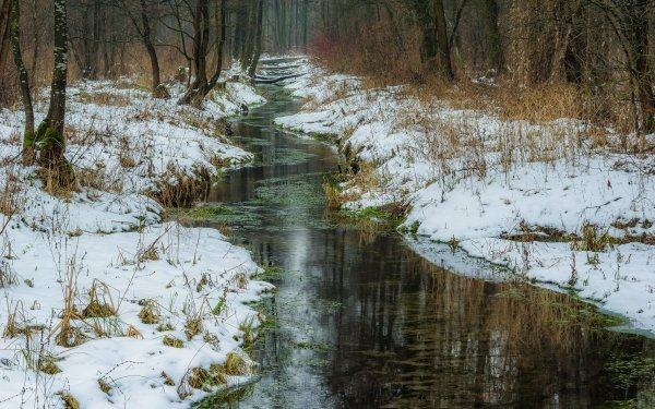 Earth Winter Forest Nature Stream Snow HD Wallpaper | Background Image