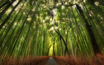 Earth - Bamboo Wallpapers and Backgrounds ID : 105662