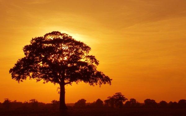 Earth Tree Trees Field Cloud Sunrise Colors Golden HD Wallpaper | Background Image