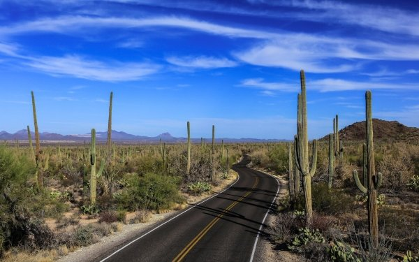Man Made Road Nature Cactus Landscape Sky HD Wallpaper | Background Image