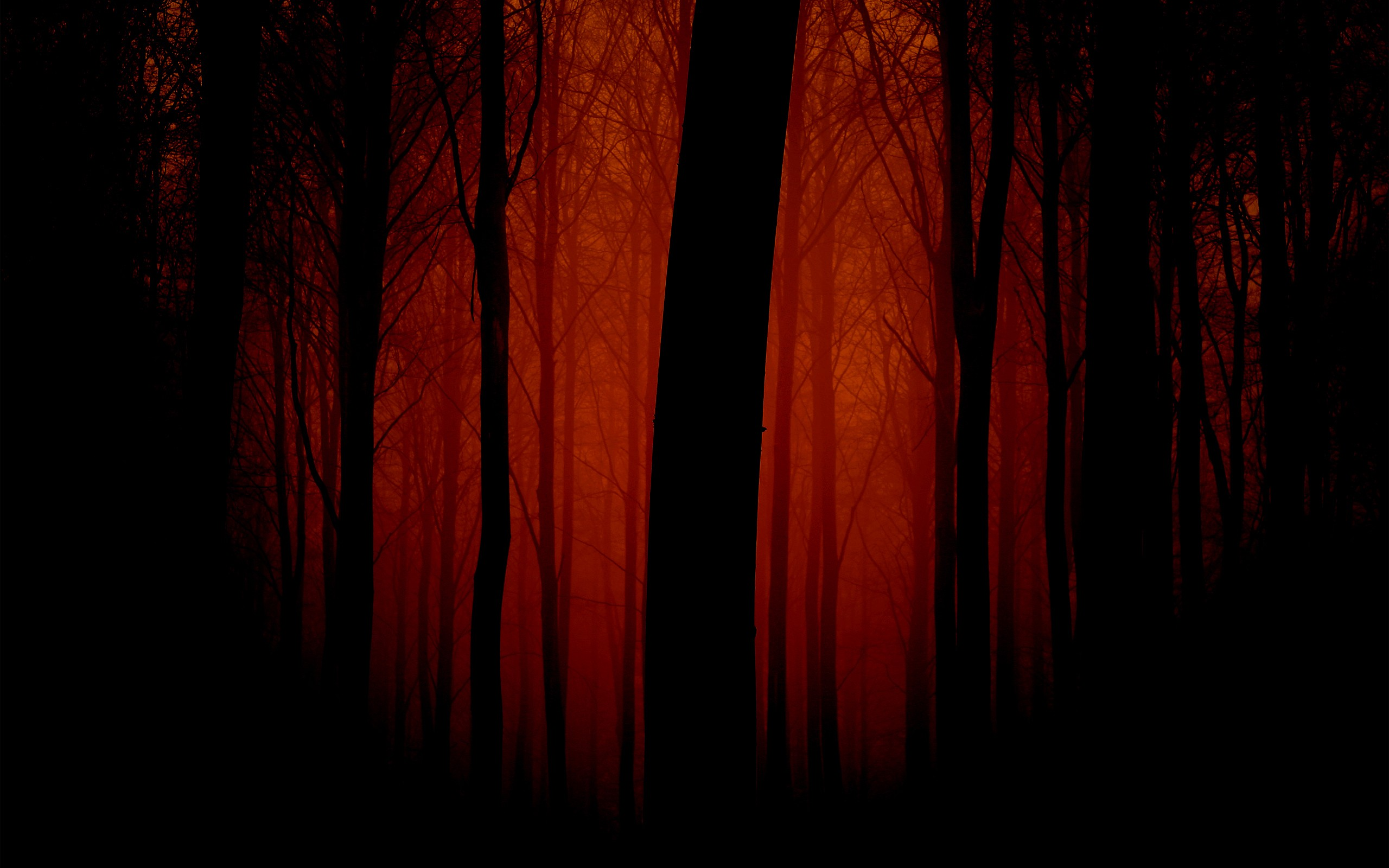 CGI - Forest Wallpaper