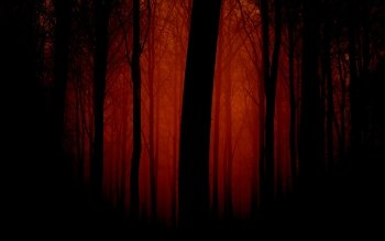 CGI - Forest Wallpapers and Backgrounds ID : 106390