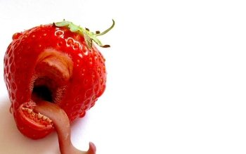 Alimento - Strawberry Wallpapers and Backgrounds ID : 10742