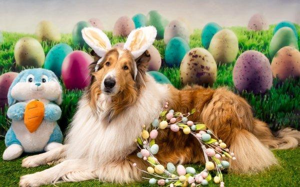 Animal Shetland Sheepdog Dogs Easter Wreath Stuffed Animal Dog Pet HD Wallpaper | Background Image