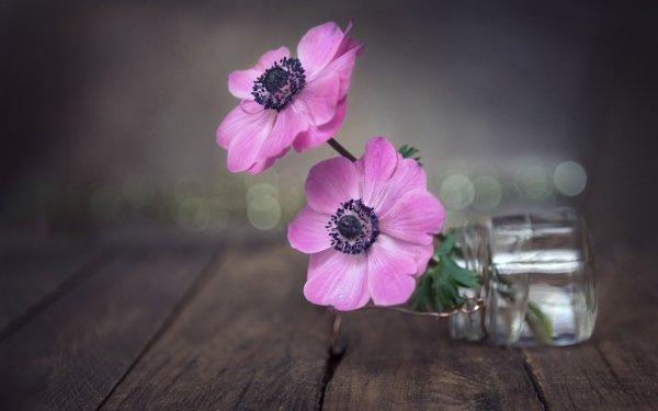 Man Made Flower Anemone HD Wallpaper   Background Image