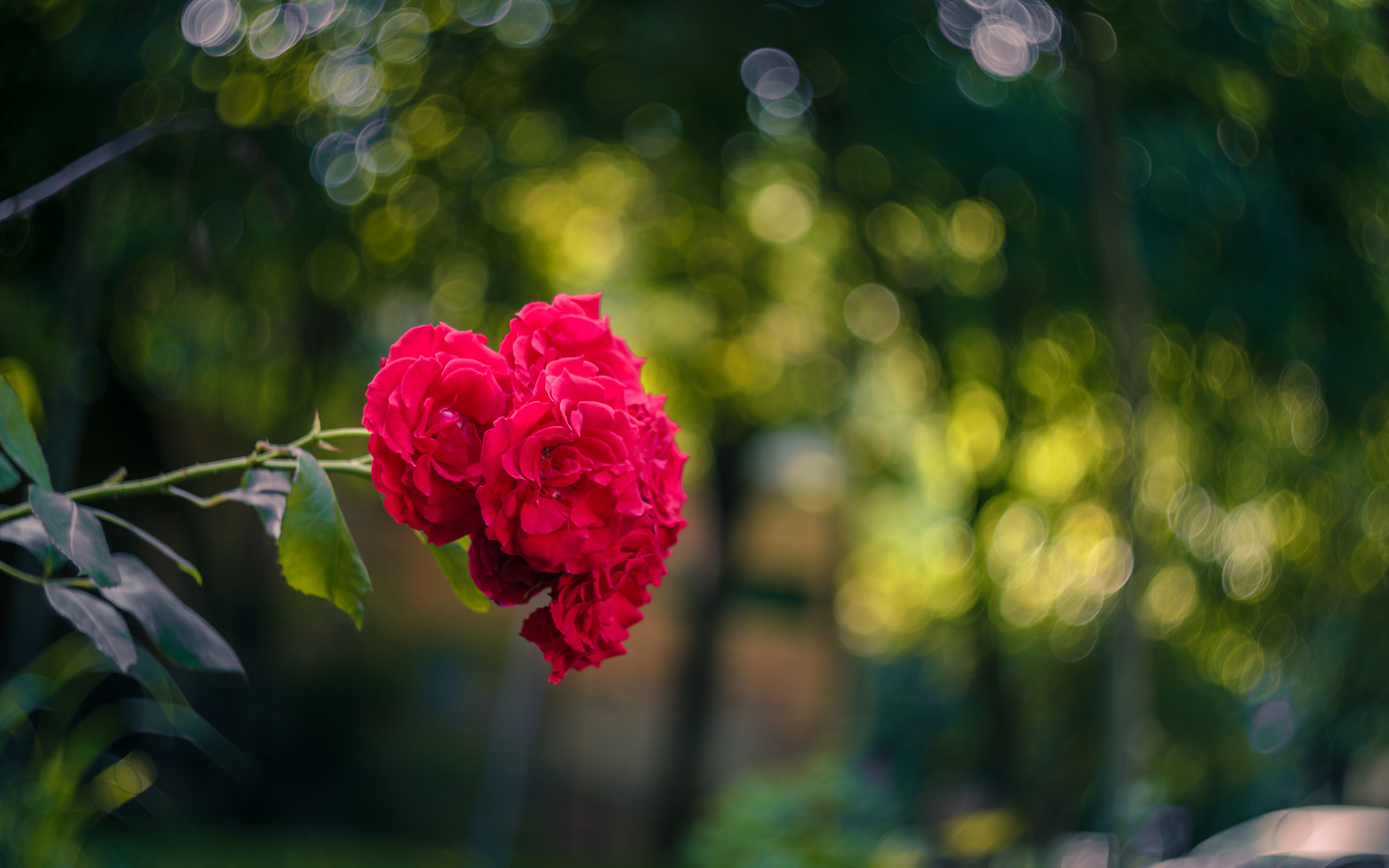 玫瑰花图片 高清壁纸 大图 植物壁纸-第2张
