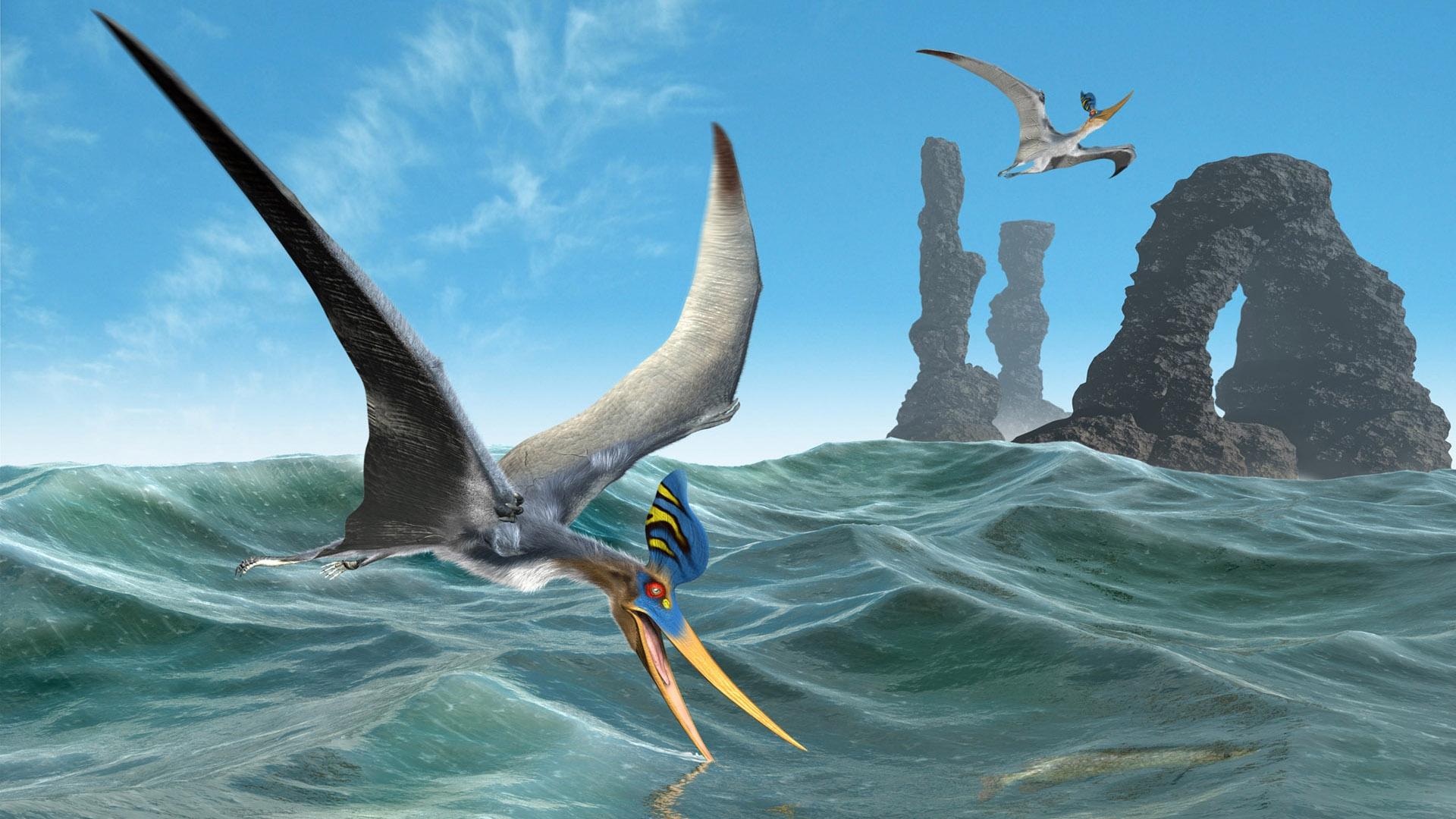 Fantasy - Bird  Wallpaper