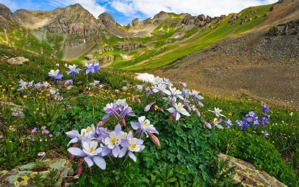 Earth Landscape Aquilegia Flower Mountain Valley Colorado USA Meadow HD Wallpaper | Background Image