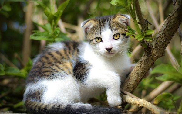 Animal Cat Cats Kitten Baby Animal Pet HD Wallpaper | Background Image