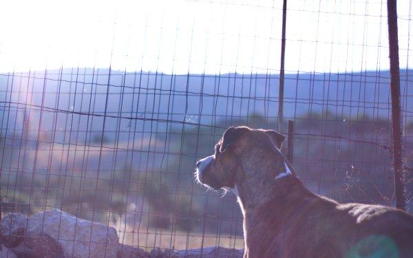 Animal Dog Dogs Grid Sunshine HD Wallpaper | Background Image