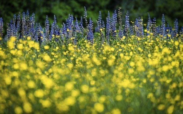 Earth Flower Flowers Meadow Buttercup Lupine HD Wallpaper | Background Image