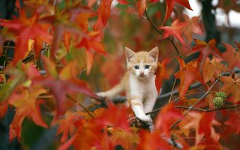Animal - Cat Wallpapers and Backgrounds ID : 110020
