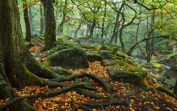 Earth Tree Root England Nature Fall Tree Forest Stone Roots Peak District National Park Moss HD Wallpaper | Background Image
