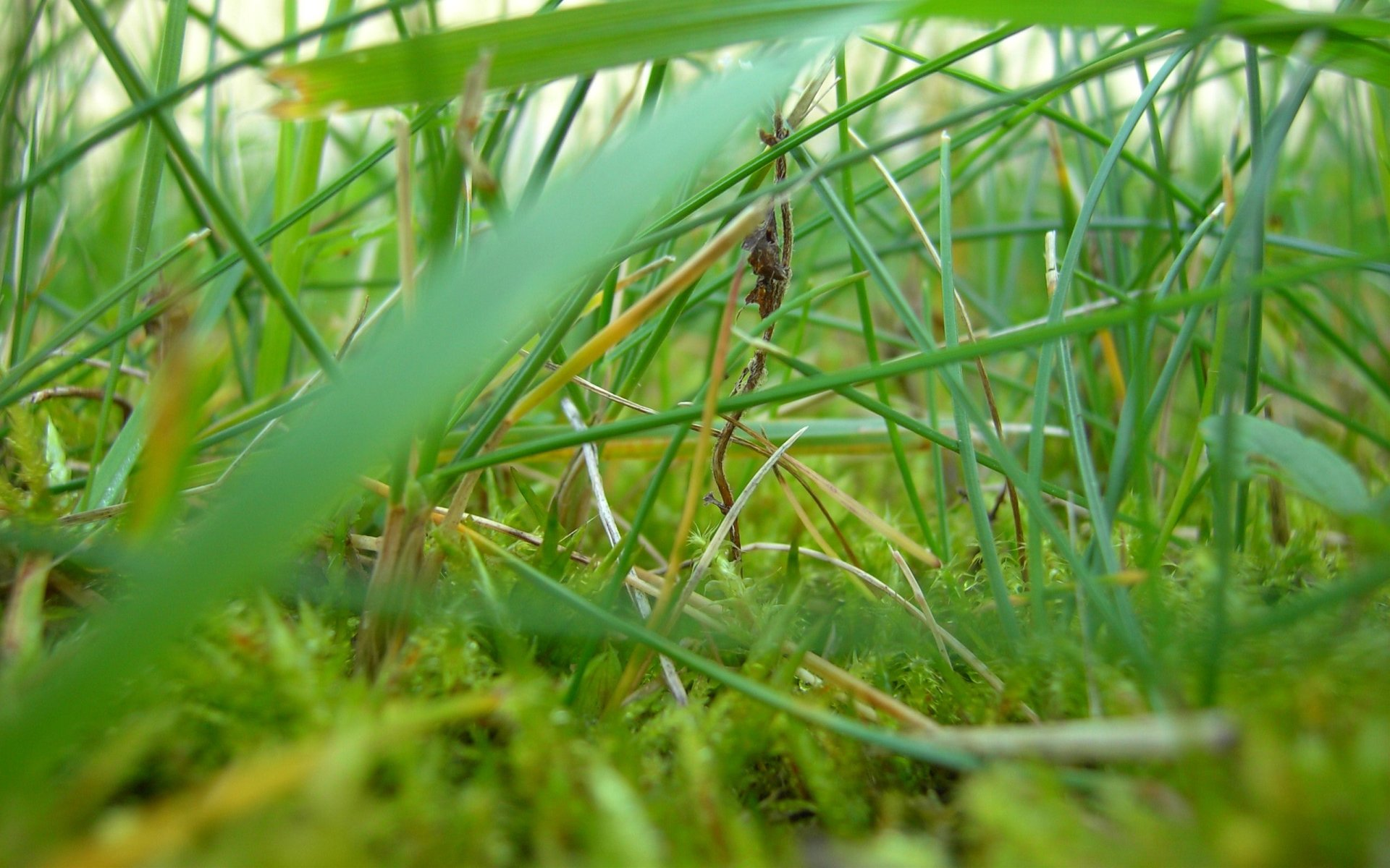 Earth - Grass  Wallpaper
