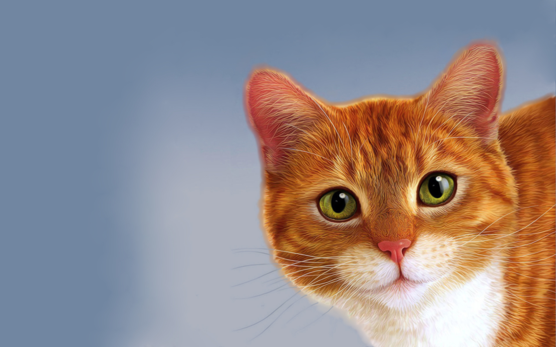 Cat HD Wallpaper | Background Image | 1920x1200 | ID ...