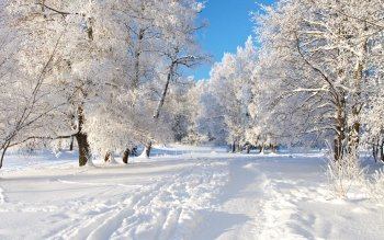 Earth - Winter Wallpapers and Backgrounds ID : 115222