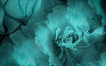 Artistic - Flower Wallpapers and Backgrounds ID : 116482