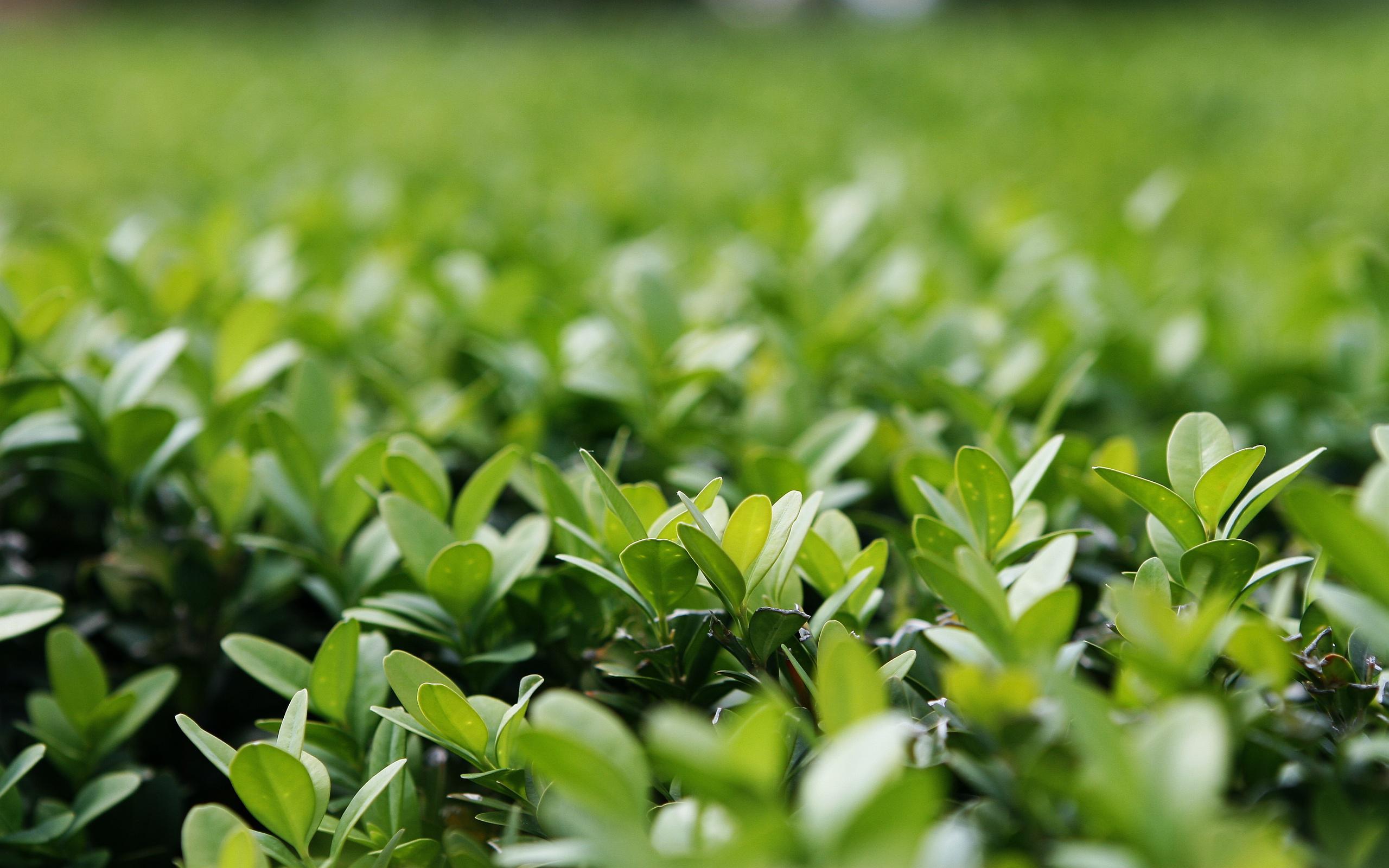 Earth   Plant Wallpaper