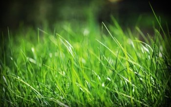 Earth - Grass Wallpapers and Backgrounds ID : 117960