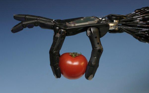 Technology Robot Tomato HD Wallpaper | Background Image