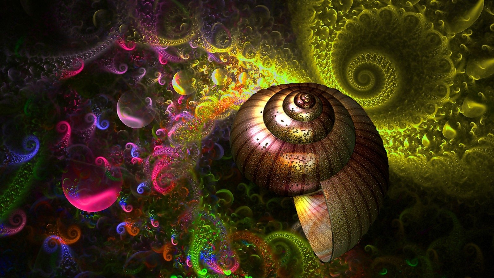 Abstract - Artistic  Shell Colors Rainbow Abstract Wallpaper
