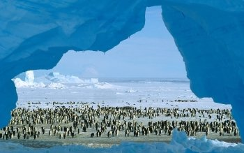 Animal - Penguin Wallpapers and Backgrounds ID : 121730
