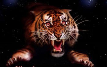 Tier - Tiger Wallpapers and Backgrounds ID : 122390