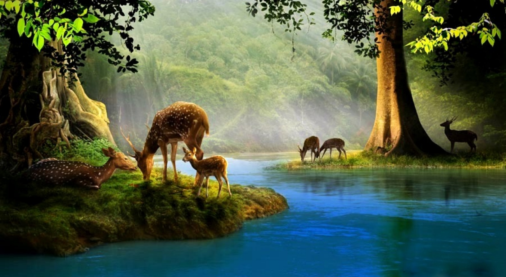 Deer Computer Wallpapers, Desktop Backgrounds 1680x920 Id: 124150