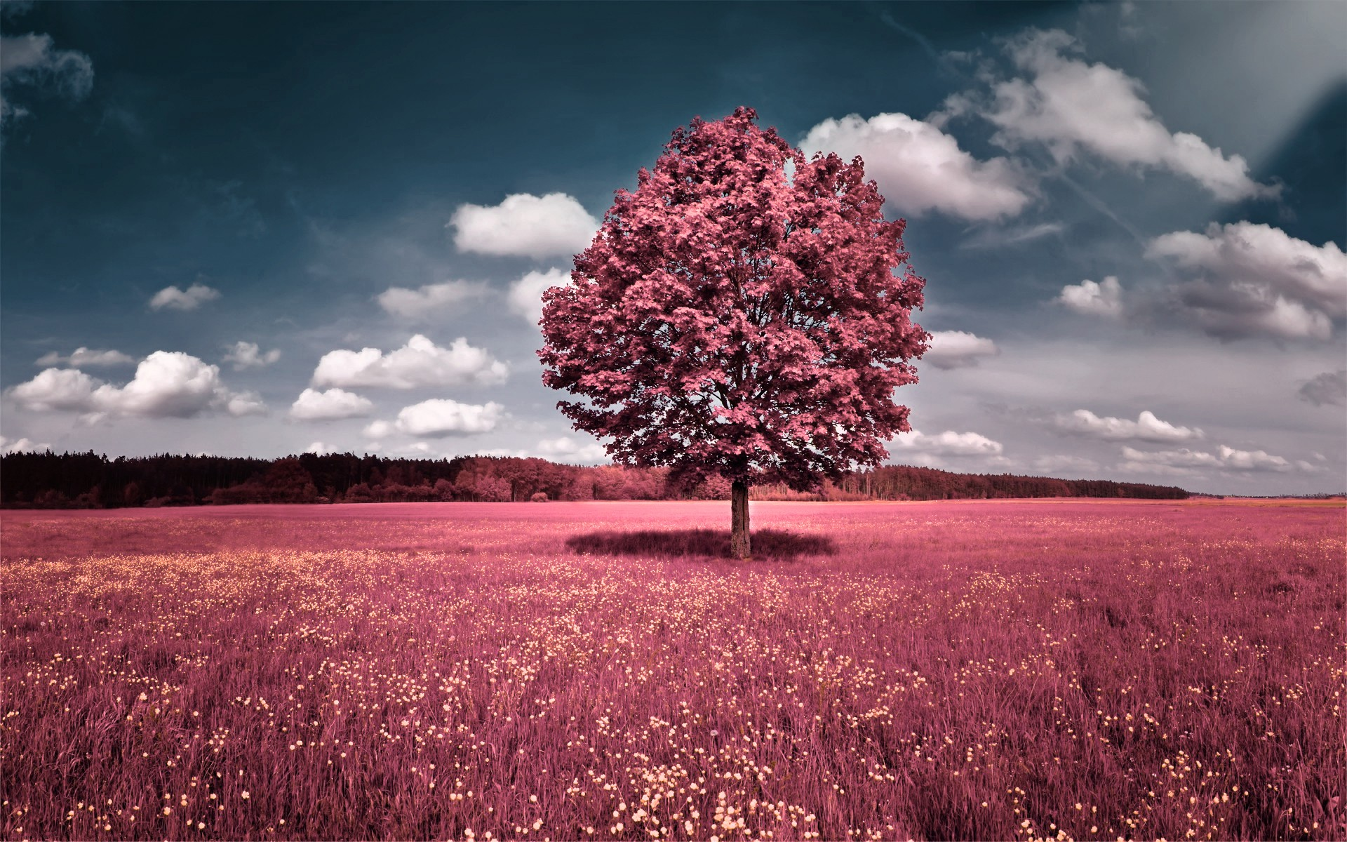 Tree HD Wallpaper | Background Image | 1920x1200 | ID ...