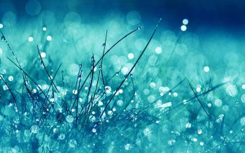 Earth - Grass Wallpapers and Backgrounds ID : 124422