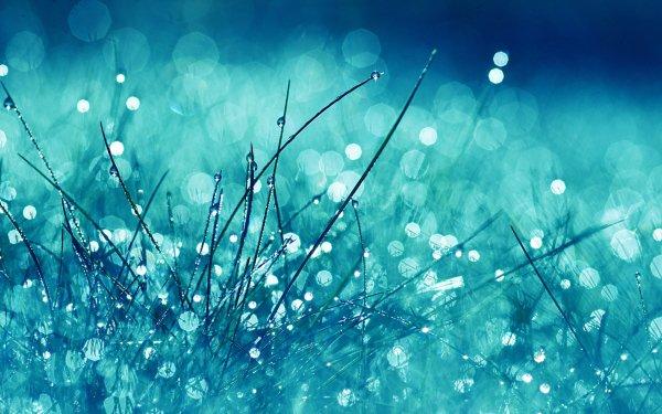 Terre/Nature Herbe Pastel Fond d'écran HD | Image