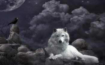 Djur - Wolf Wallpapers and Backgrounds ID : 125502