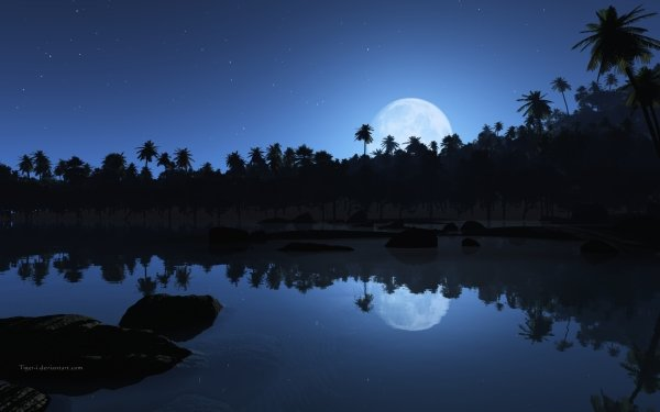 Earth Beach Blue Night Shore Tropical Palm Tree HD Wallpaper | Background Image