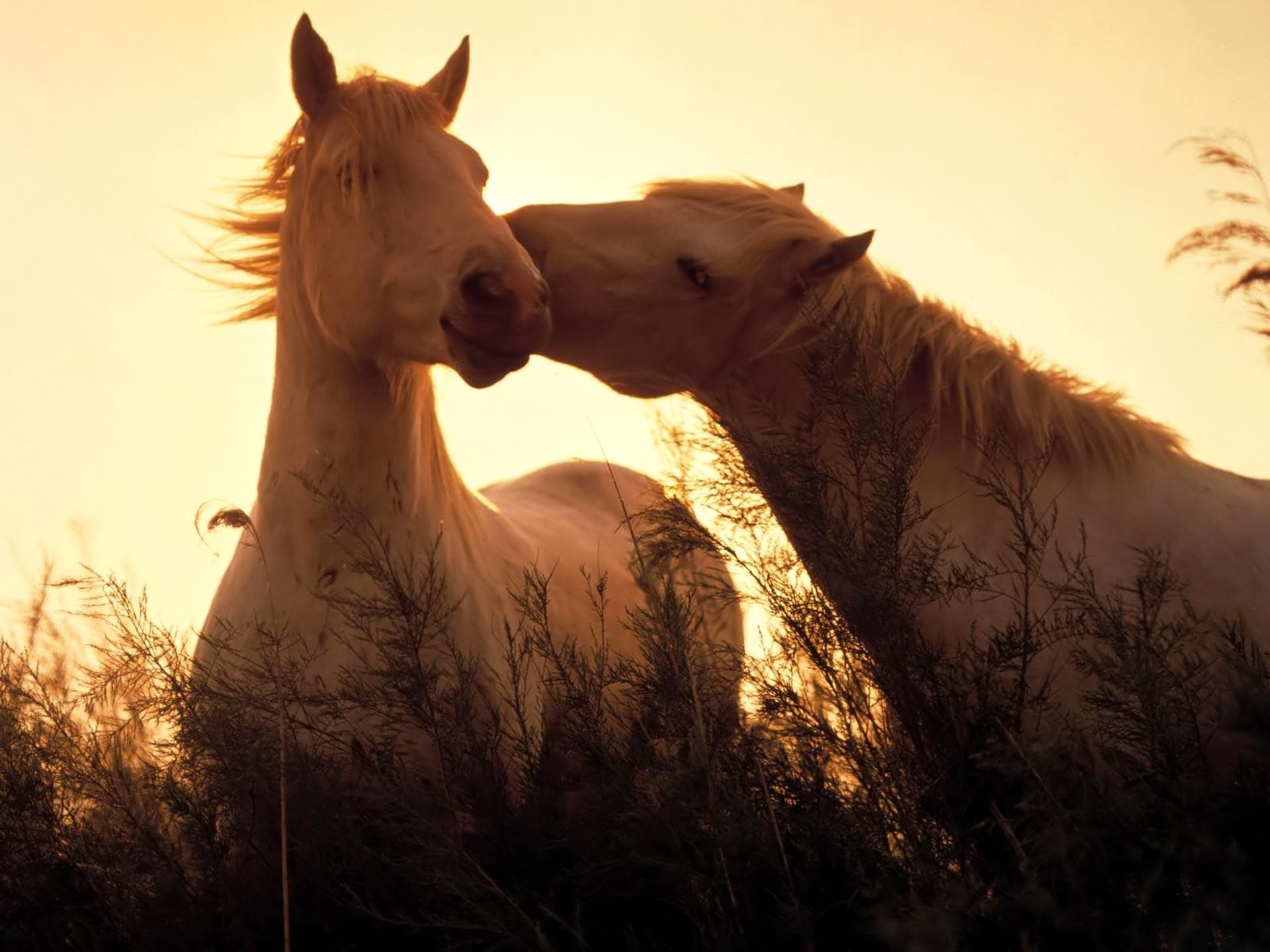 At Resimleri -3-
