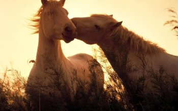 Animal - Horse Wallpapers and Backgrounds ID : 139232