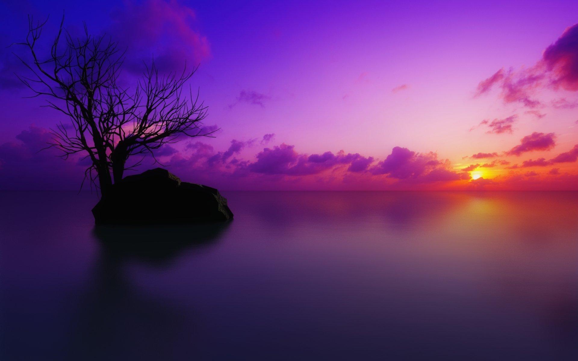 Earth - Scenic  Sunset Ocean Pastel Tree Artistic Purple Cloud Rock Wallpaper