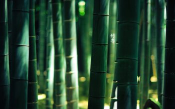 Tierra - Bamboo Wallpapers and Backgrounds ID : 146252