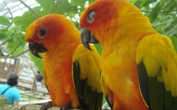 Animal - Parrot Wallpapers and Backgrounds ID : 148070