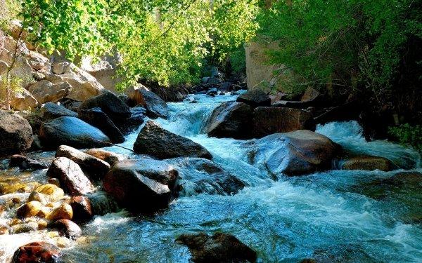 Earth Stream Photography Creek Rock Tree HD Wallpaper | Background Image