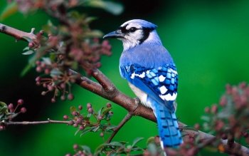 Animal - Bird Wallpapers and Backgrounds ID : 150552